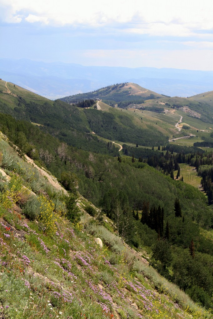 The view from Guardsman Pass - wildflowers in the foreground and vistas and mountains beyond.