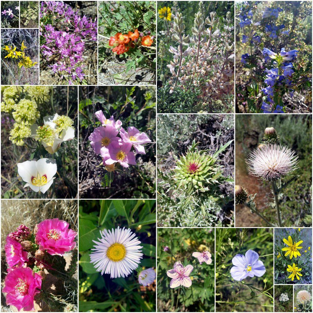 Neighborhood wildflowers