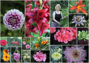 merrow-rd-garden