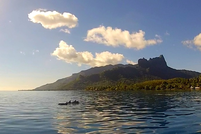 I had the pleasure of spending time with dolphins while on my paddleboard in Tahiti.