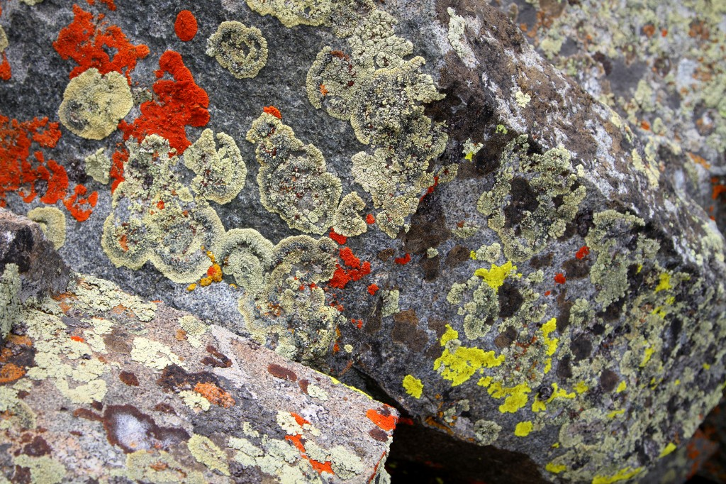 The lichen on the boulders at the summit was eye-catching in amber, rust, sage and lime green colors.